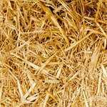Выращивание лука из  севка: практические советы