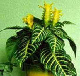 Как ухаживать за ядовитыми комнатными растениями