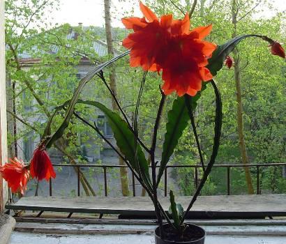 Что нужно знать о выращивании суккулентов