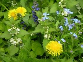 Использование сорняков с пользой для своего огорода