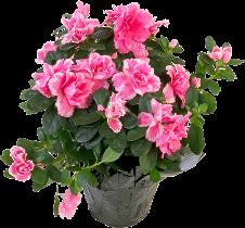 Какие цветы можно выращивать на северных окнах