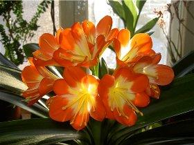 Комнатные растения для темного окна