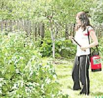 Как защитить свой сад и огород от вредителей без химии