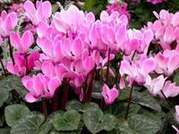Защитные свойства комнатных растений