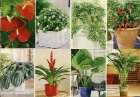 Как действуют комнатные растения на энергетику  дома