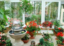 Как поддерживать нормальную влажность  для растений