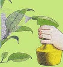 Что делать, чтобы создать нормальную влажность для растений