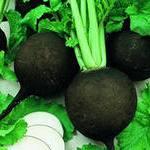 Черная редька - лечебные свойства