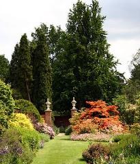Хвойные растения в вашем саду - выращивание и уход