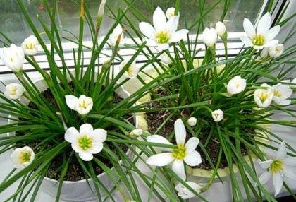 Весенний уход за комнатными растениями