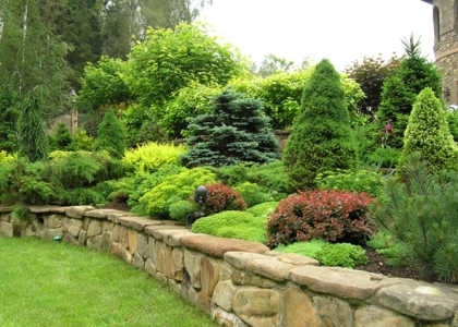 Как правильно ухаживать за хвойными растениями в саду