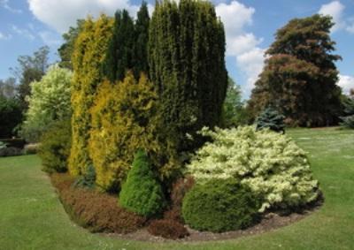 Что надо знать по выращиванию хвойных растений в саду