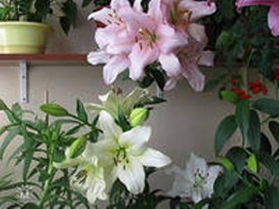 Какие растения можно вырастить на балконе