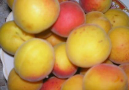 Вкусный рецепт абрикосового джема