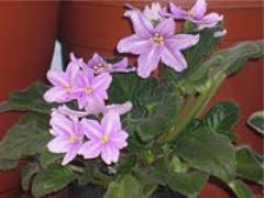 Мелкие мошки в цветочных горшках
