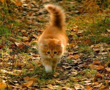 Осень - рыжая кошка