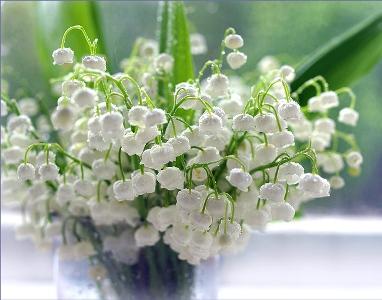 Ландыши в вашем саду - советы по посадке и выращиванию