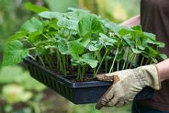 Для дачников и огородников - полезные советы