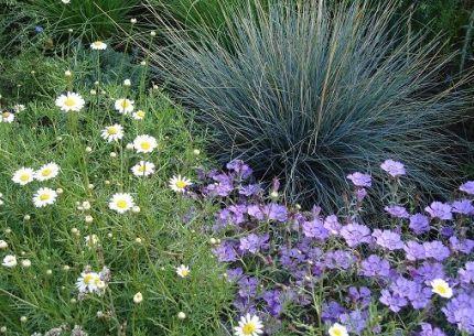 Как вырастить декоративные злаки в саду