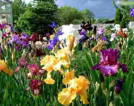 Непрерывное цветение клумбы в июне