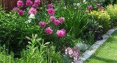 Непрерывно цветущая клумба июня