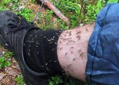 Как приготовить домашние средства от комаров