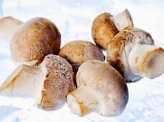 Сохранение грибов на зиму