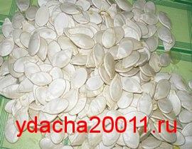 отвар из семян тыквы от паразитов