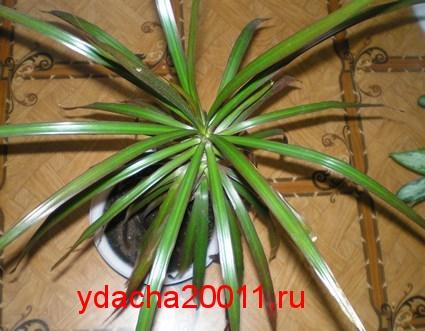 Комнатные растения - фильтры