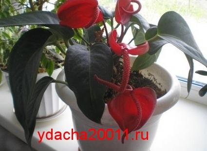 Растения - пылесосы
