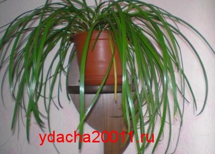 Комнатные растения - наши спасатели