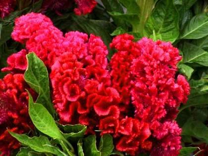 Какие сухоцветы можно вырастить в своем саду
