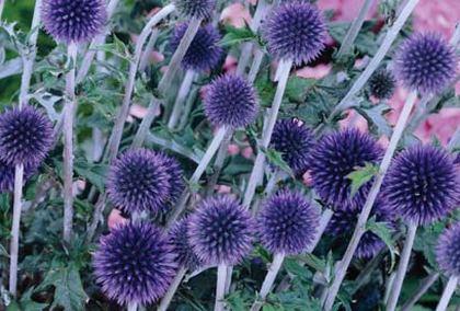 Сухоцветы для зимних цветочных композиций