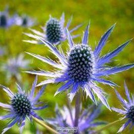 Красивые сухоцветы для зимних композиций