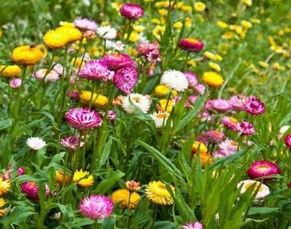 Самые популярные сухоцветы