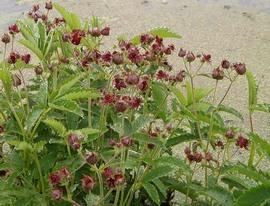 Рецепты травяных сборов от артрита