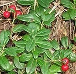 Самы эффективные сборы трав от артрита