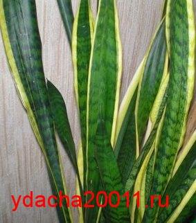 Самое теневыносливое растение