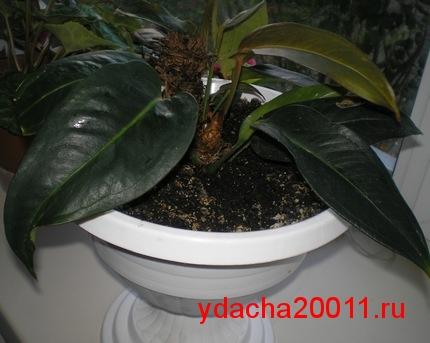 Как правильно подкармливать растения йодом