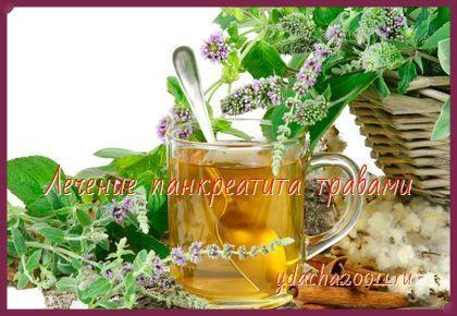 Лечение панкреатита травами