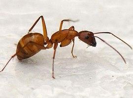 Как вывести муравьев: в квартире и на даче