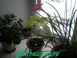 Подкормка комнатных растений домашними средствами