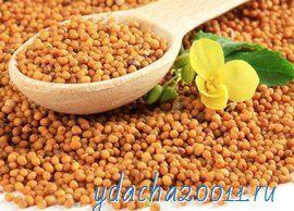 Семена горчицы: применение и полезные свойства