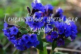 Тенелюбивые цветы для клумбы