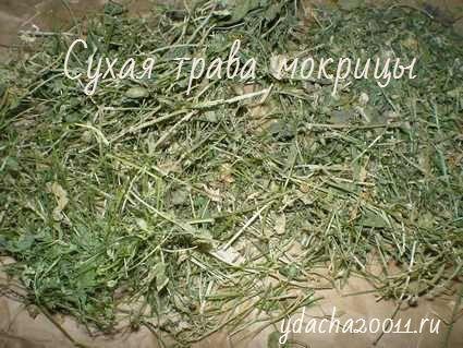 Сухая трава мокрицы