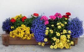 Выращивание декоративных растений в контейнерах