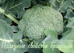 Полезные свойства брокколи и противопоказания